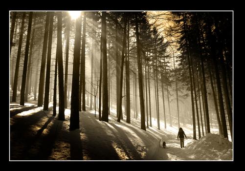 Nebel-Winterlandschaft