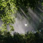 """Morgensonne und """"Gartengiessen"""""""
