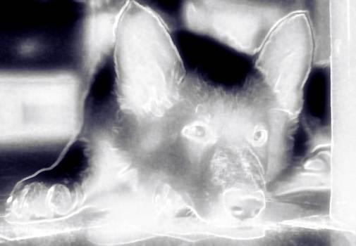 Schattenwölfchen