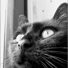 der Blick einer Katze ...