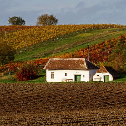 Herbst im Weinviertel 17.02