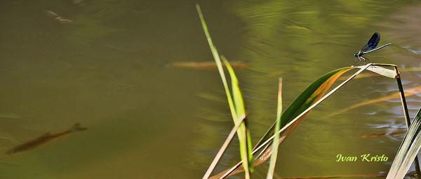 Aus den Bild schwimmen