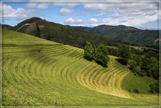 Wiesen in der Steiermark