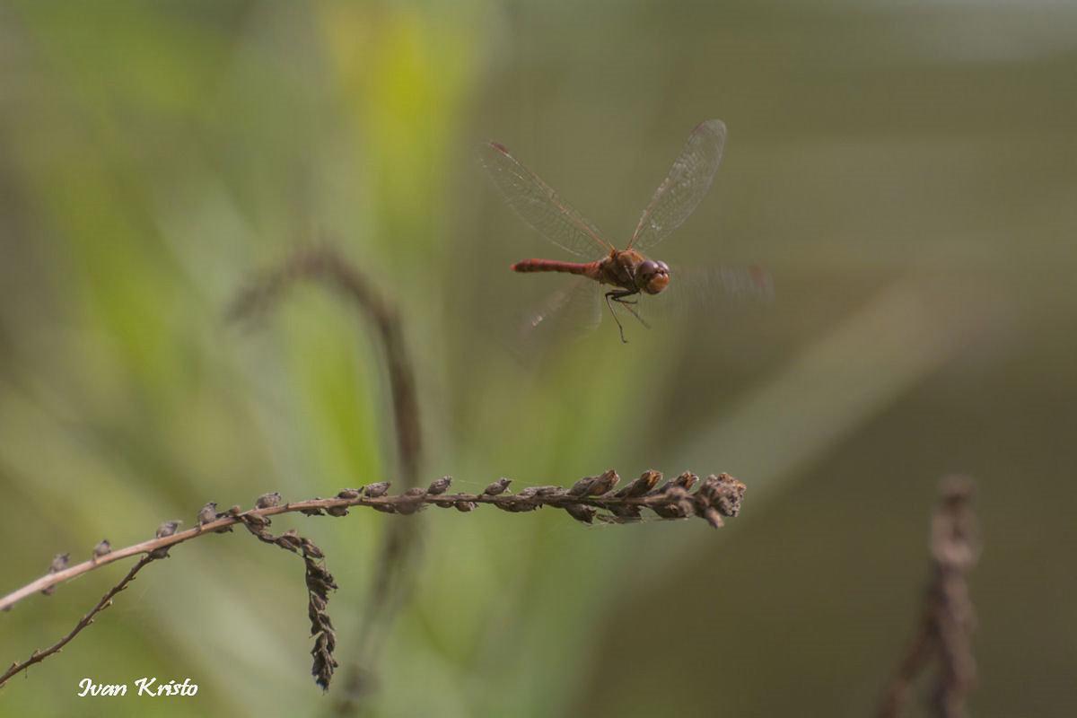 Libele und die Spine