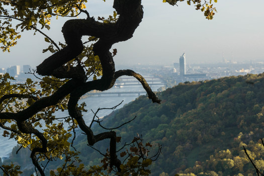 Am Nasenweg Richtung Donau