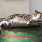 Katze mit Kater