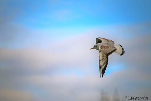 Prima Flugwetter