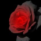 einsames Rot