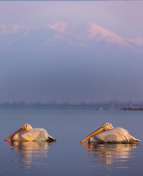 Kerkini lake, Greece