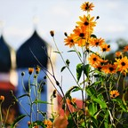 Klosterblumen