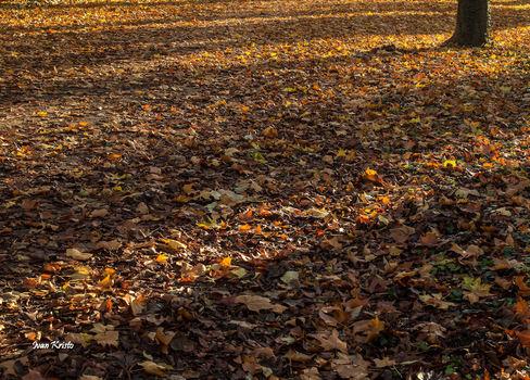 Herbst Teppich
