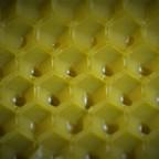 Mittelwand einer Bienenwabe