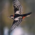 -- in flight --