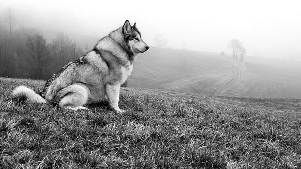Nisha im Nebel