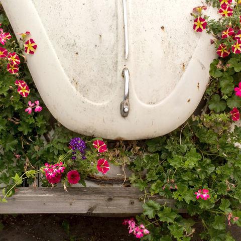 Blumenfresser