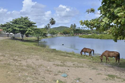 WILDPFERDE IN BAHIA - BRASILIEN