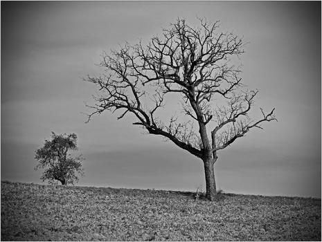 kahler Baum_1
