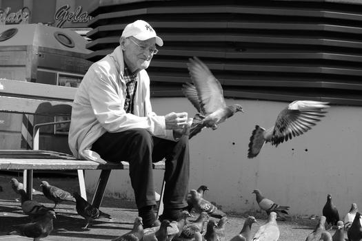 Der alte Mann und die Tauben :-)