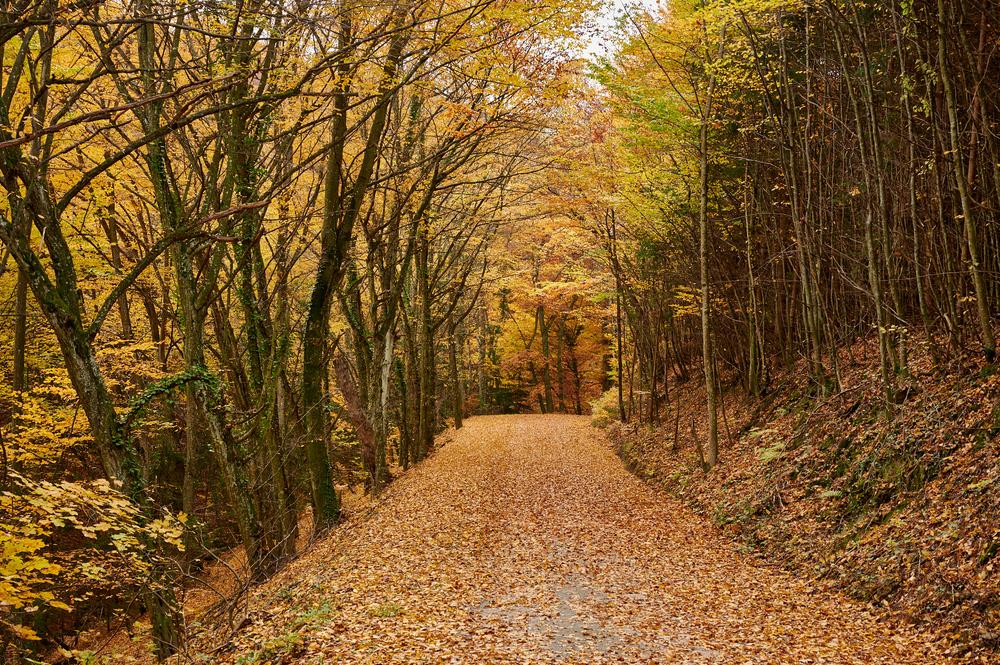 Blätter pflastern den Weg