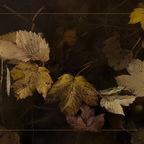 Der Herbst ist da.....