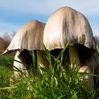Familie Pilz beim Sonnenbad