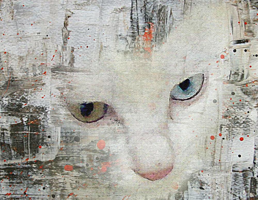 Katze, einmal anders.....