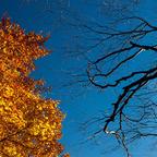Herbst - LIcht & Schatten