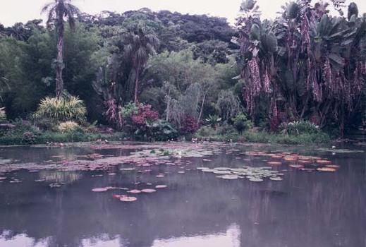 URWALD IN DER NÄHE VON MANAUS - BRASILIEN