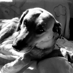 Yuna meine Hundedame