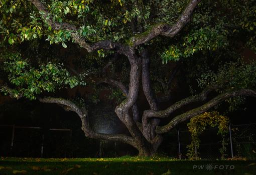 Apfelbaum im Spätherbst