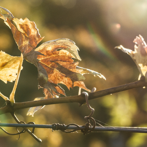 Des Herbstes sonniger Gruß