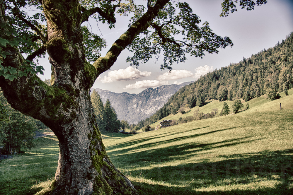 TreeHDR
