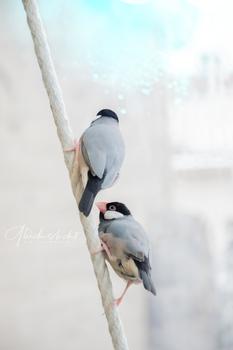 Zahme Vögel träumen von Freiheit. Wilde Vögel fliegen