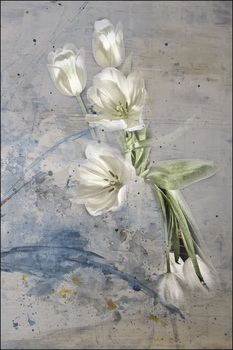 Tulpen, etwas anders.....