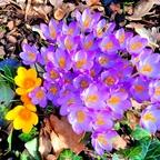 """""""Frühling, ich sah dich doch heuer schon...!""""  ;-)"""