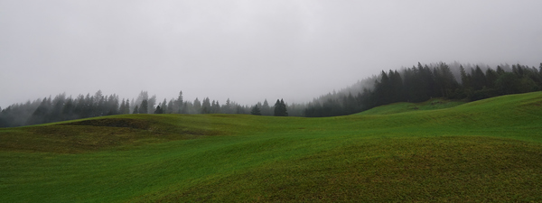 Nebel Baum Wiese
