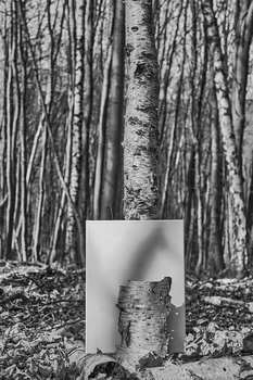 Den Wald voller Bäume nicht sehen....