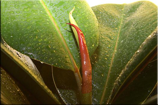 Zimerpflanze