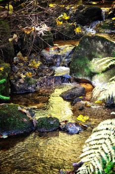 Golden Water 2