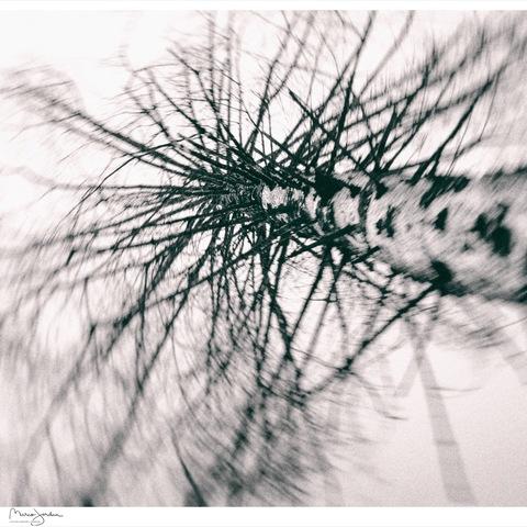 winterlicher nadelbaum