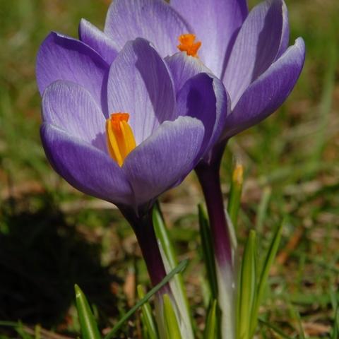 War gerade im Garten, endlich Frühling!!! 4