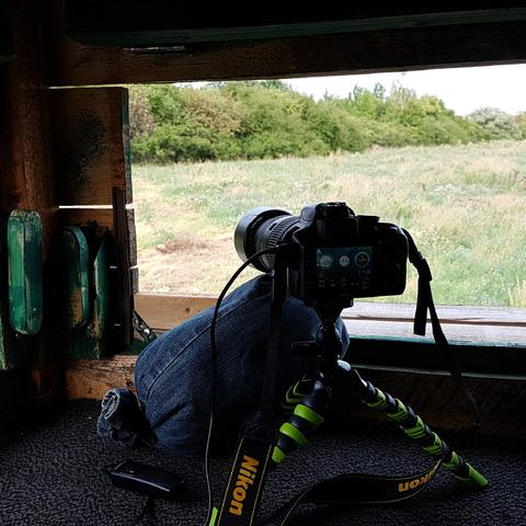 Auf der Jagt! Geschossen wird mit der Nikon D3300 ;)