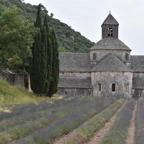 Provence Lavendelblüte