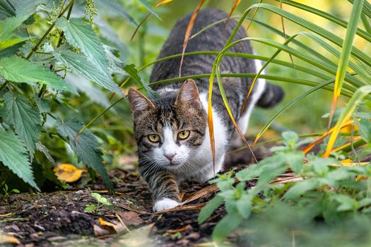 Ein streunende Katze