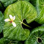Madeiragrün1_ gestrandet