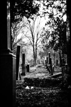 AmZentralfriedhof #9