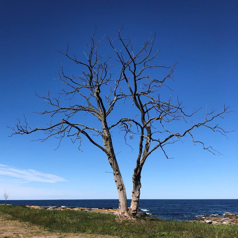 Noch'n Baum...