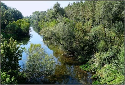 Auwald an der Donau
