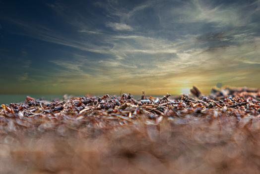 Planet der Ameisen