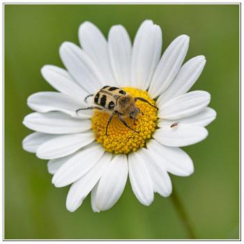 Das ist meine Blume